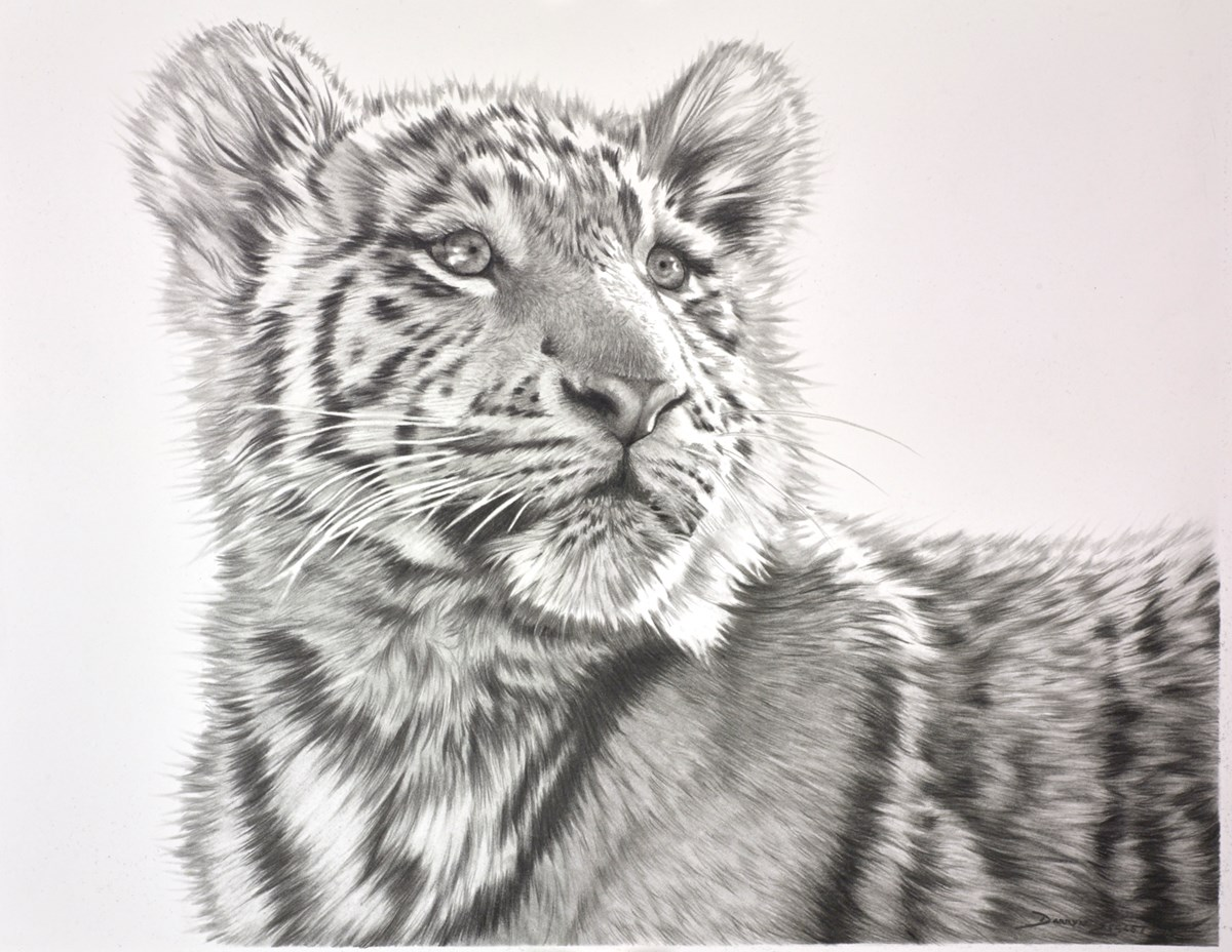 Tiger Cub Study III by darryn eggleton -  sized 14x11 inches. Available from Whitewall Galleries